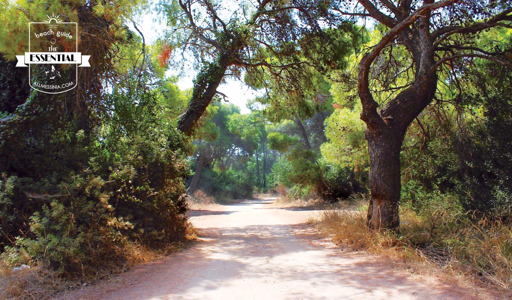 Elaia Beach Kyparissia - The untouched pine trees coastal forest is welcoming you