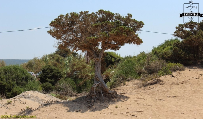Lagouvardos Beach - tree